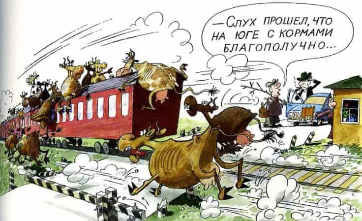 сельское хозяйство (животноводство) России